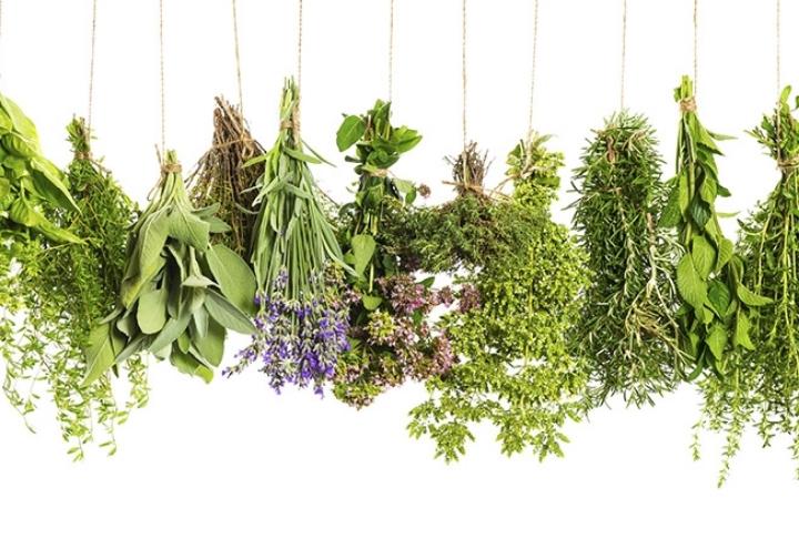 Kış Aylarında Evinizde Yetiştirebileceğiniz Bitkiler