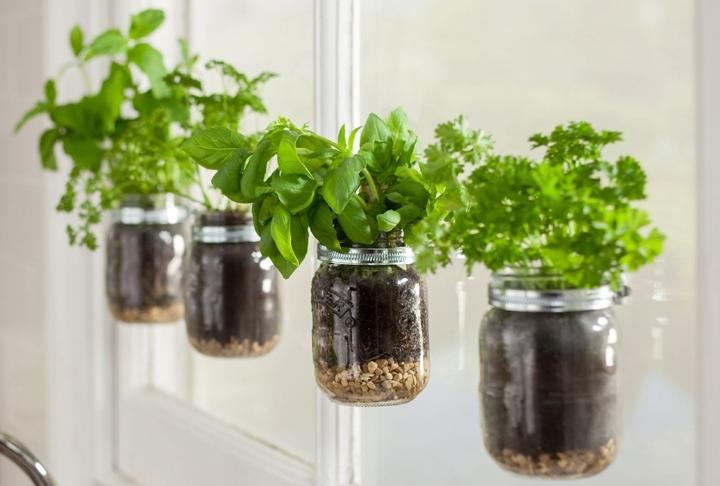 Mutfakta Yetiştirilen Yenebilir Bitkiler