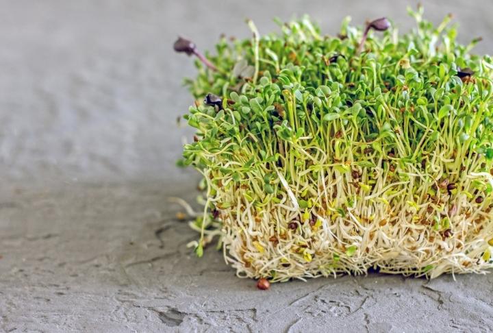 Mikro Yeşilliklerin Gücü Nereden Geliyor?